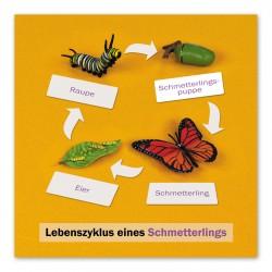 Lebenszyklus Schmetterling: Kontrollkarte