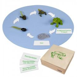 Frosch: Kunststoff-Figuren im Kasten
