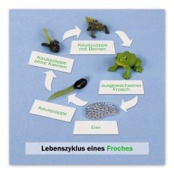Lebenszyklus Frosch: Kontrollkarte