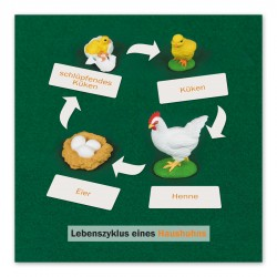 Lebenszyklus einer Henne: Kontrollkarte