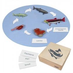 Lebenszyklus eines Lachses: Figuren im Kasten