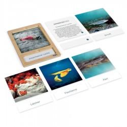 Lebenszyklus eines Lachses: Karten mit Tablett